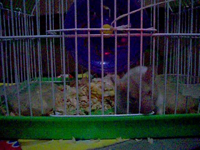 Hamster buka pintu 2