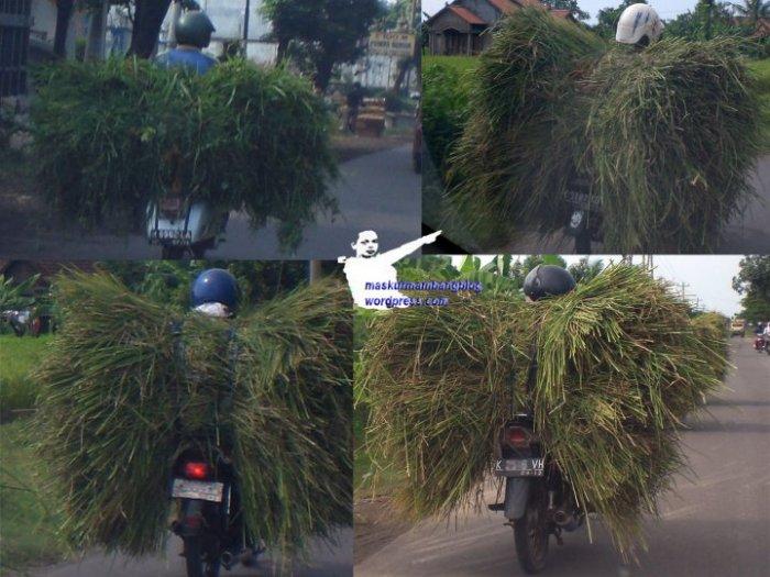 Para pengangkut rumput