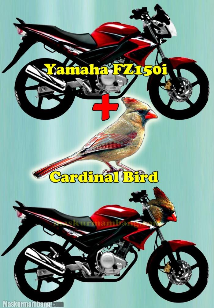 FZ150i Cardinal Bird