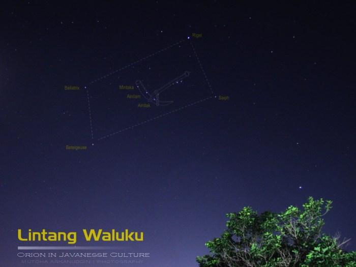 waluku (2)