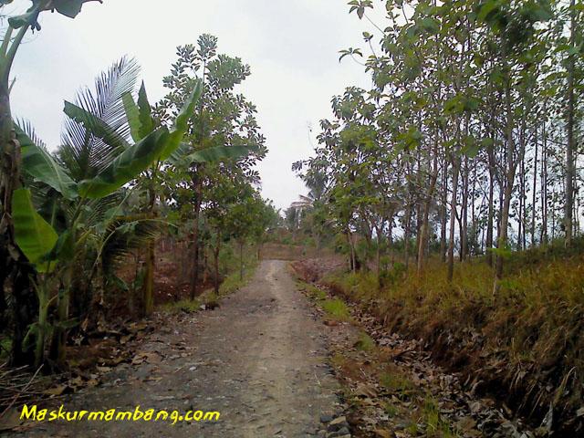 Pekaja - Wlahar Wetan 06