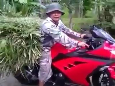 Angon Sapi Ngarit Pake Ninja2