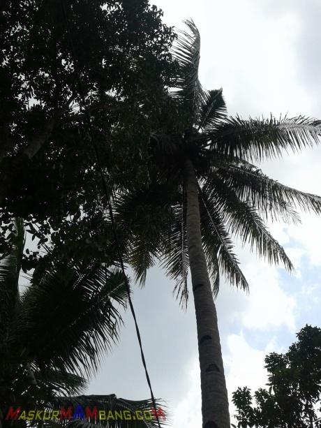 Hati-hati Parkir Di Bawah Pohon Kelapa 01