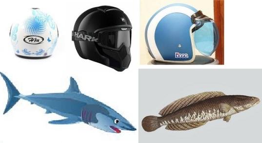 Helm dan Ikan