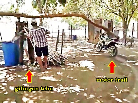 Giling Tebu Pakai Motor Trail