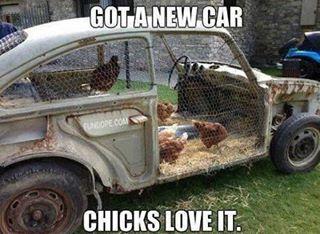 Kandang Ayam mobi tua