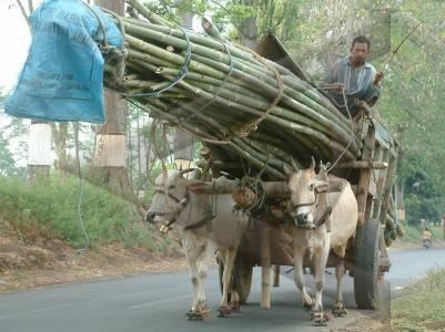 angkut bambu